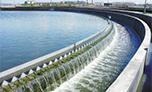 上海老港城市污水厂脱水污泥固化